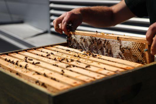Der Bienenstock am Dach der Pillergasse